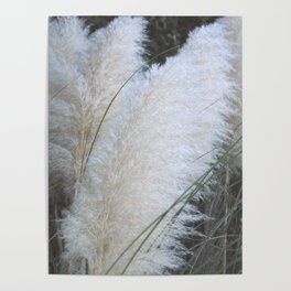 Feather Like Poster