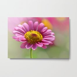 Pink summer flower 012 Metal Print