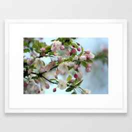 Crabapple in Bloom Framed Art Print