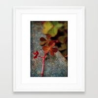 clover Framed Art Prints featuring Clover by LoRo  Art & Pictures