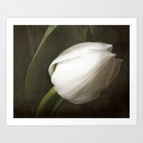 White Tulip Art Print