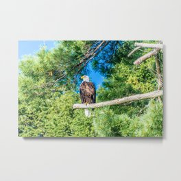Bird of Prey Metal Print