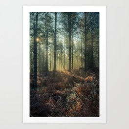 Misty Winter Woodland - I Art Print