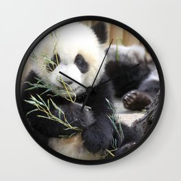 Extremely Adorable Little Panda Eating Eucalyptus Leafs Ultra HD Wall Clock