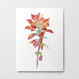 Indian Paintbrush Wildflower Watercolor Metal Print