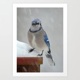 Blue Jay in the Snow Art Print