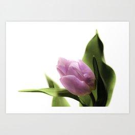 Pink Tulip Dreams Art Print