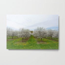 more rows of trees Metal Print