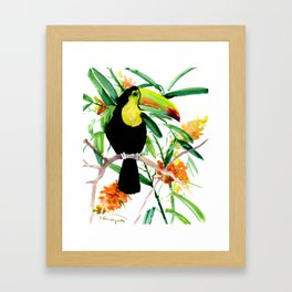 Toucan, Tropical Art, tropics Framed Art Print
