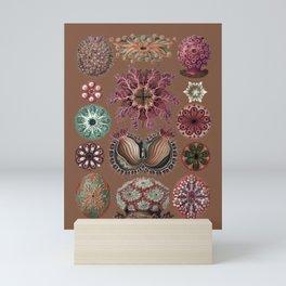 Ernst Haeckel Ascidiae Sea Squirts Earth Tones Mini Art Print