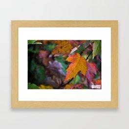 Orange Leaf Framed Art Print