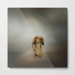 It's Showtime Baby - Dachshund Metal Print