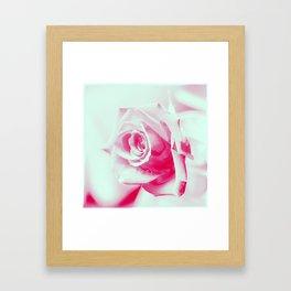 A Rose is a Rose... Framed Art Print