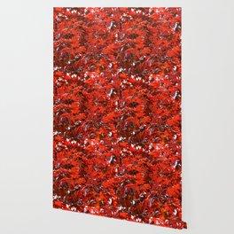 Japanese Red Maple Leaves Wallpaper