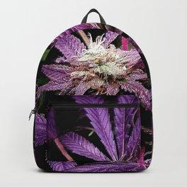 Purrple Backpack