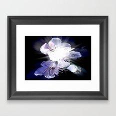CHERRY BLOSSOMS. Framed Art Print