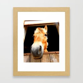 Horse Face Close Up Accentuating his Nose Framed Art Print