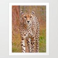 cheetah Art Prints featuring Cheetah by Chris Thaxter