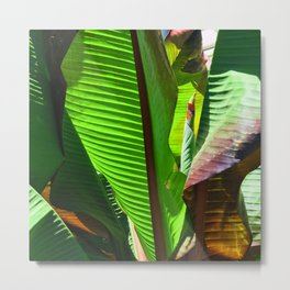 Exotic, Exquisite Banana Palm Leaves Majestic Photo Metal Print
