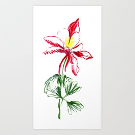 Red Columbine Flower in watercolor Art Print