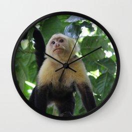 Capuchin Monkey Wall Clock