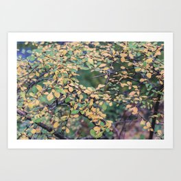 New York Nature V Art Print