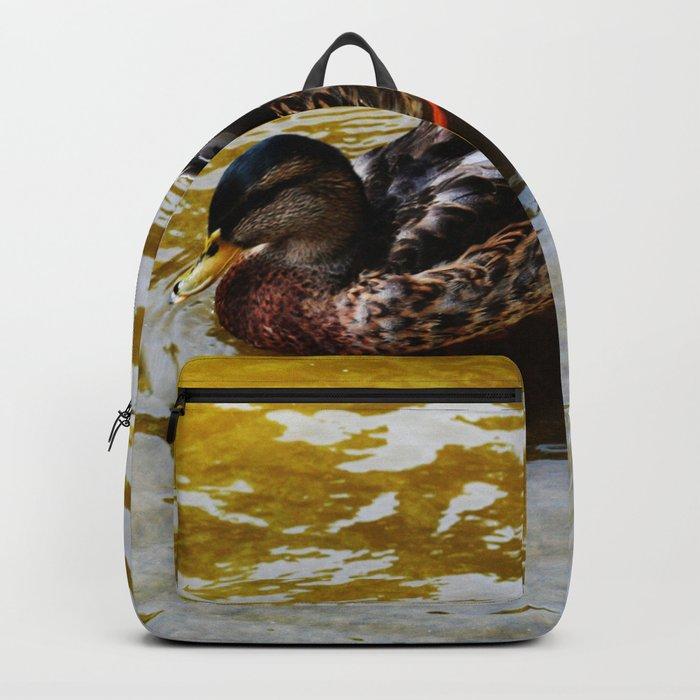 Duck swimming in golden water Backpack