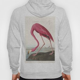 Pink Flamingo by John James Audubon (1785 - 1851 ) Hoody