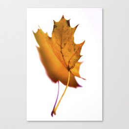 yellow leaf #2 Canvas Print