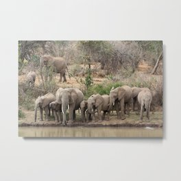 Elephants on the riverbank Metal Print