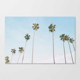 Beach Palms Canvas Print