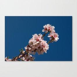 Spring Cherry Tree Blossoms - I Canvas Print