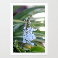 Dollar flower Art Print