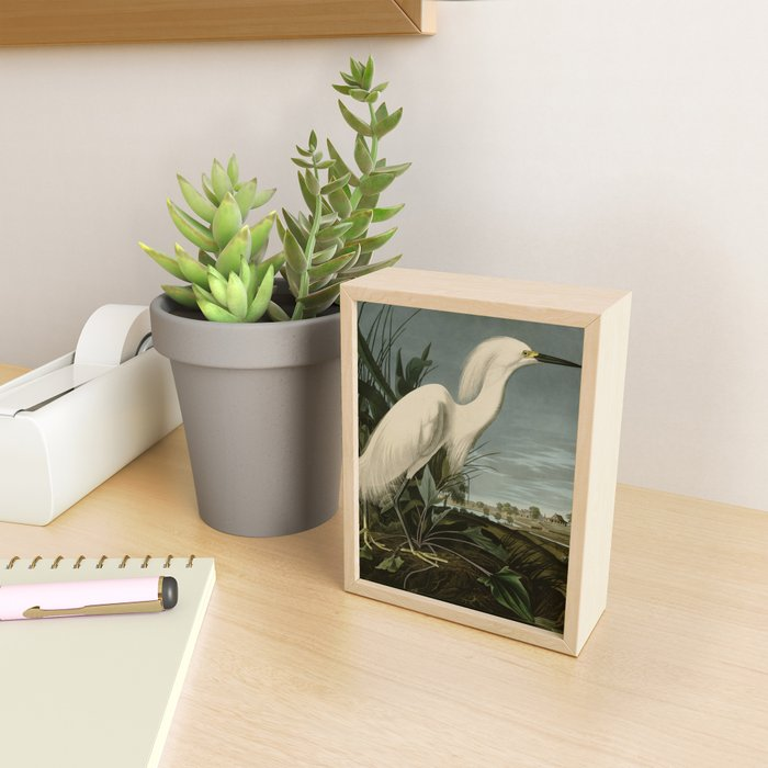Snowy Heron or White Egret from Audubon Birds of America Framed Mini Art Print