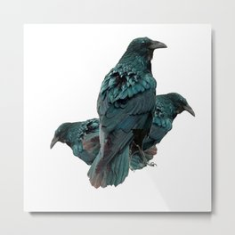 THREE CROWS/RAVENS  SOCIALIZING FROM SOCIETY6 Metal Print
