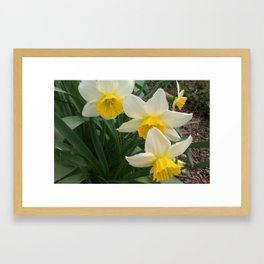 Butter Yellow Framed Art Print