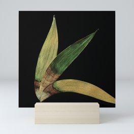 Three Eucalyptus Leaves: A Minimalist Perspective Mini Art Print