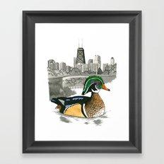 Wood Duck in Lincoln Park Framed Art Print