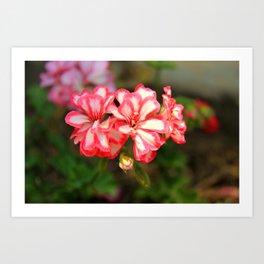 some nice flowers Art Print
