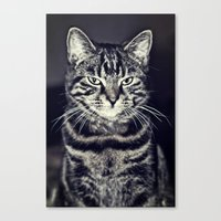 austin Canvas Prints featuring Austin by Rachel's Pet Portraits