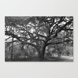 Black and White Mossy Oak Canvas Print