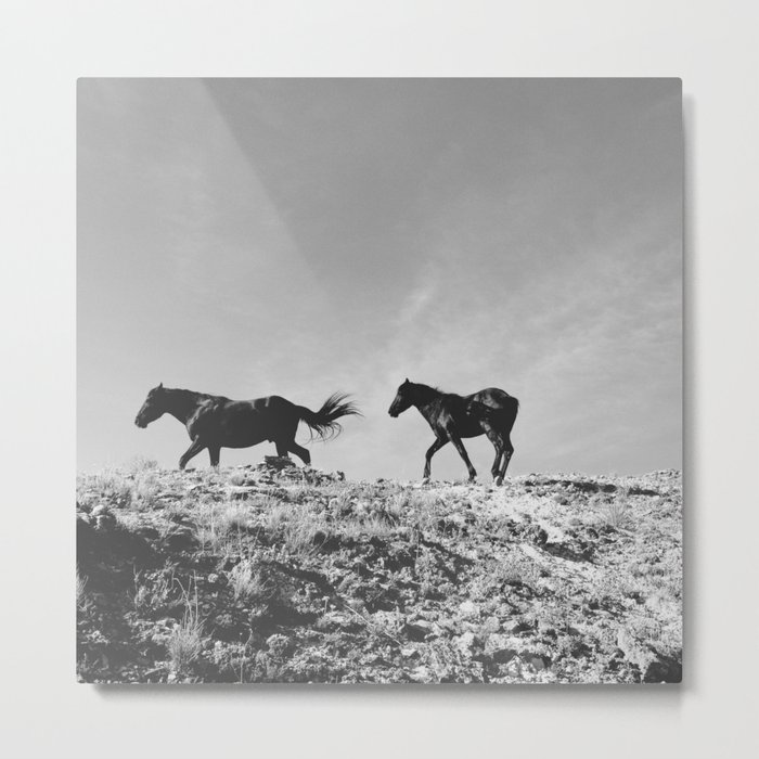 Pryor Mountain Wild Mustangs Metal Print