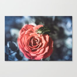 the Beauty and the beast Canvas Print