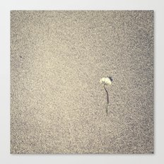 Wide Dandelion Canvas Print