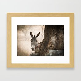 The curios donkey Framed Art Print