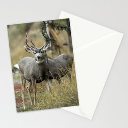 two bucks Stationery Cards