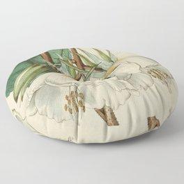 Edwards' Botanical Register Floor Pillow