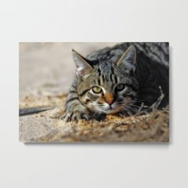 Don't Move Metal Print
