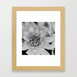 Chrysanthemum Flower in black and white - Floral Photography #Society6 Framed Art Print