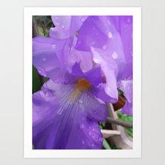 Iris Dew Art Print